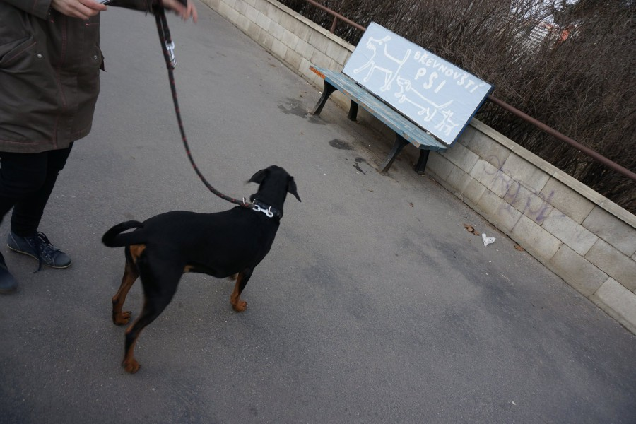 Polep laviček v Břevnově